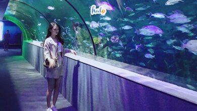 Photo of Cuối tuần rủ 'cạ cứng' phiêu lưu đại dương tại Vinpearl Aquarium Times City