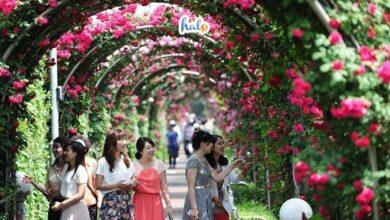 Photo of Công viên hoa hồng Rose Park: Địa điểm sống ảo triệu like cho team Hà Nội