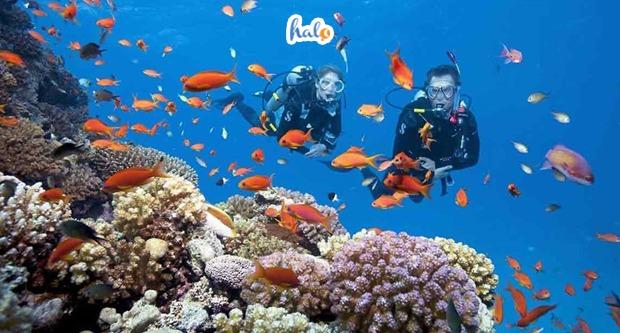 Photo of Ghim ngay  kinh nghiệm lặn biển Nha Trang 'cực chi tiết' cho chuyến đi du lịch sắp tới của bạn