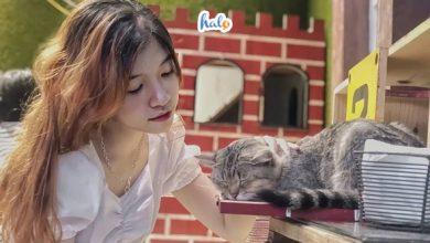 Photo of List 7 quán cà phê thú cưng Hà Nội siêu dễ thương đốn tim những con Sen