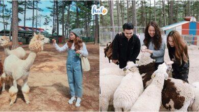 Photo of Kinh nghiệm du lịch sở thú Zoodoo Đà Lạt mới nhất 2020