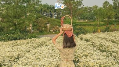 Photo of List 10 khu du lịch sinh thái gần Hà Nội mà bạn không thể bỏ qua