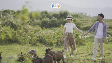 Photo of Trọn bộ 'bí kíp' du lịch Ba Vì 1 ngày cho dân thích vi vu