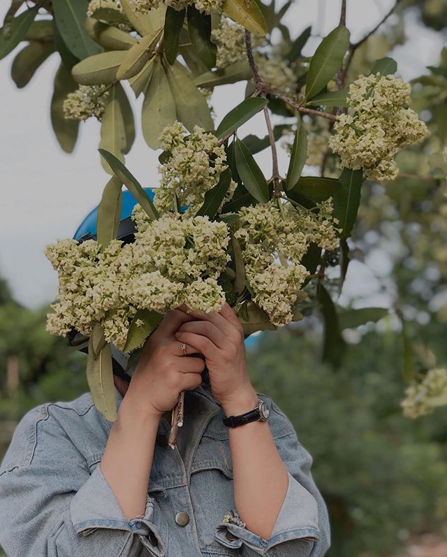 con pho hoa sua khac