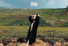 Photo of TOÀN TẬP khám phá nhà máy Trà cổ Cầu Đất Farm từ dân thổ địa