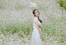 Photo of Hà Giang tháng 11, thời điểm checkin hoa tam giác mạch đẹp nhất