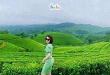 Photo of Check in gấp tại ốc đảo chè Long Cốc đẹp như 'tiên cảnh' ngay gần Hà Nội