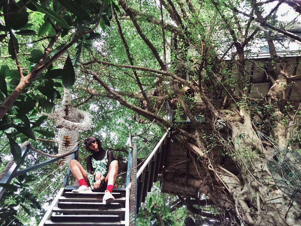 tree house suu tam