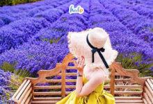 Photo of Rủ bạn thân tới vườn hoa Lavender Đà Lạt 'sống ảo' thả ga chỉ với 30k