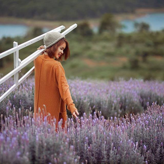 vuon hoa lavender da lat halo.vietnam