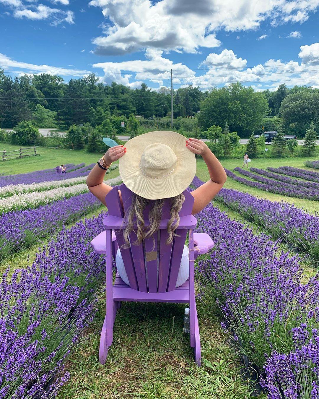 vuon hoa lavender da lat