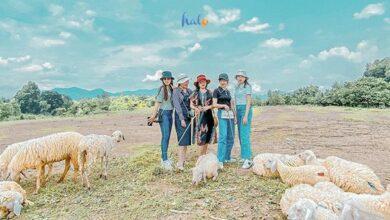 Photo of Đồi cừu Vũng Tàu: điểm checkin cho những shoot hình cực 'hút'