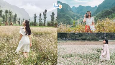 Photo of 'Học lỏm' 10 cách tạo dáng chụp ảnh HOA TAM GIÁC MẠCH cực đẹp