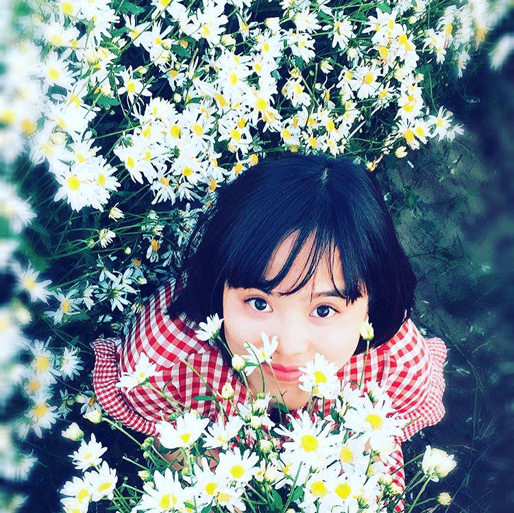 cuc hoa mi 8