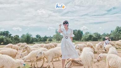 Photo of Check in sương sương ở đồng cừu Suối Nghệ có ngay bộ ảnh xinh lung linh
