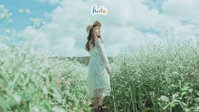 Photo of Check – in Mộc Châu tháng 12 rực rỡ những mùa hoa
