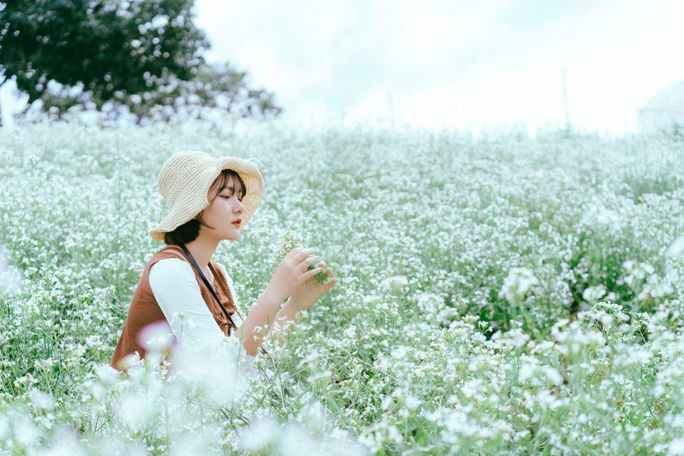 hoa cai trang da lat