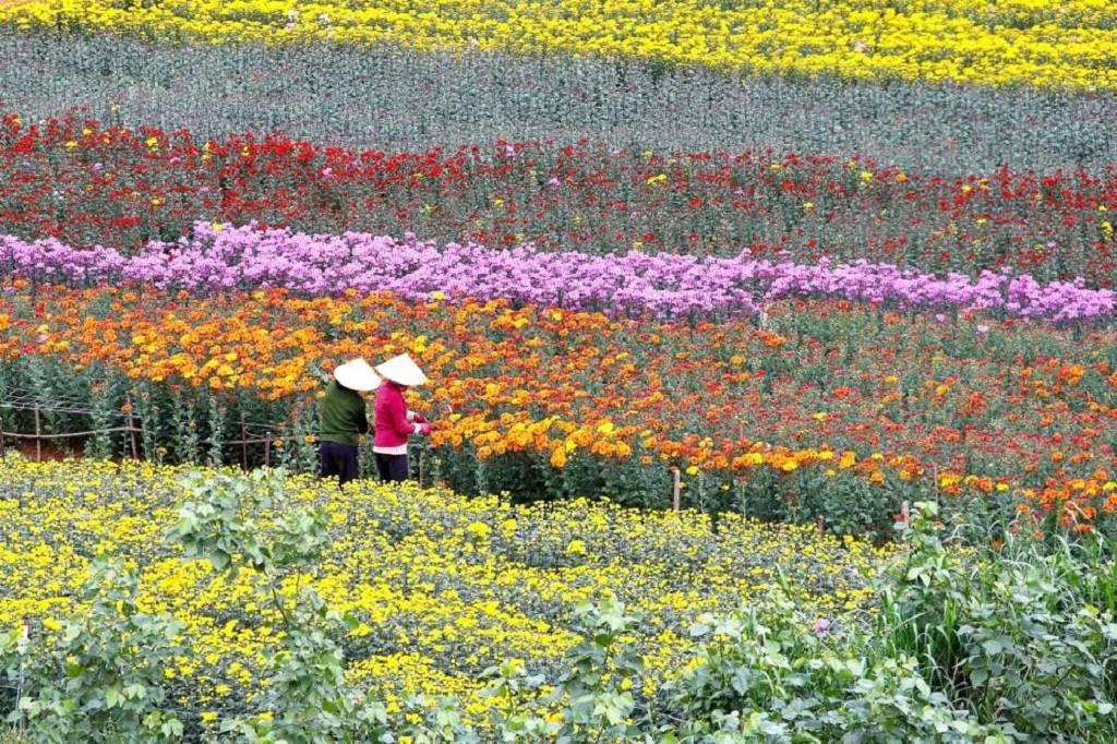 lang hoa thai phien o da lat