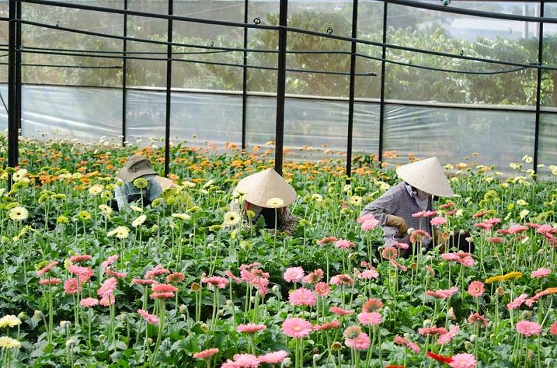 lang hoa thai phien o dau