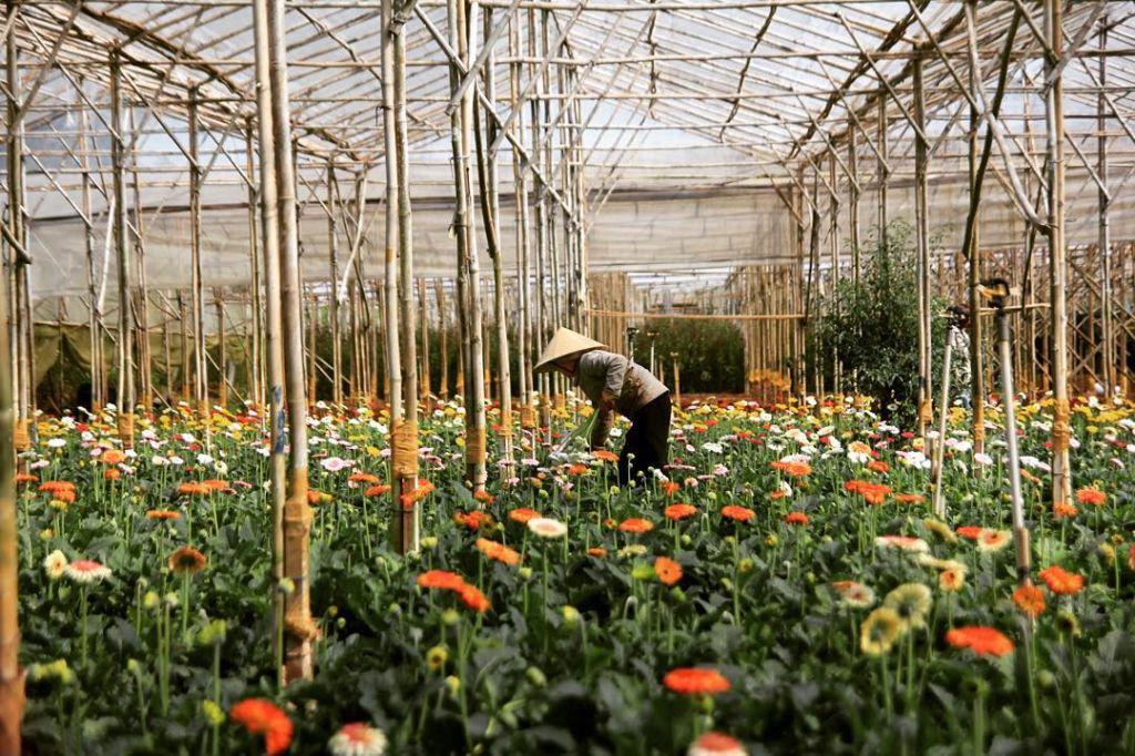 nguoi trong hoa tai lang hoa van thanh da lat