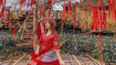 Photo of Ghé thăm 'Đà Lạt thu nhỏ' tại vườn hoa Hàm Rồng Sapa