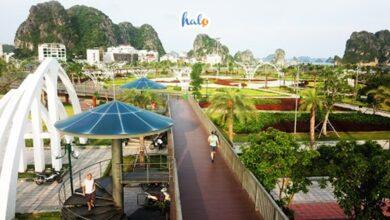 Photo of Ấn tượng công viên hoa Hạ Long với quy mô 'khủng' nằm ngay sát vịnh