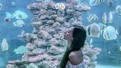 Photo of Khám phá đại dương thu nhỏ tại Viện Hải Dương Học Nha Trang