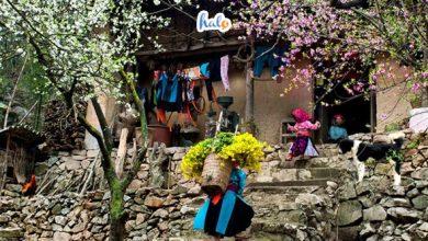 Photo of Say lòng trước muôn hoa khoe sắc khi đi du lịch Hà Giang tháng 1, 2