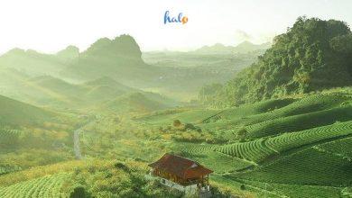 kinh nghiệm du lịch Sơn La