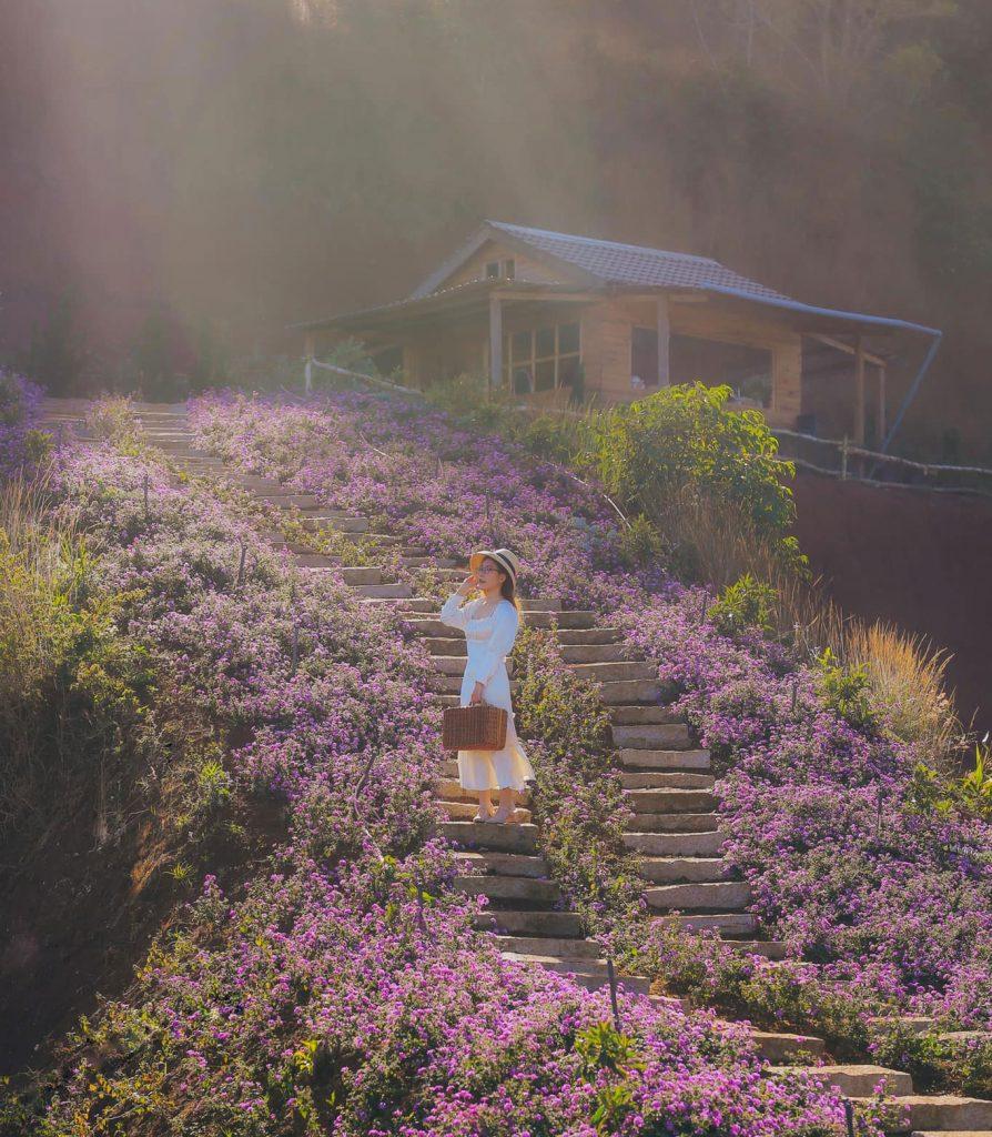 hoa-lavender-dalat-thang-5