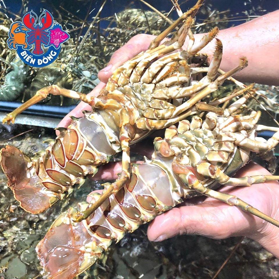 hải san tươi sống tại nhà hàng hải sản biển đông trần quốc toản