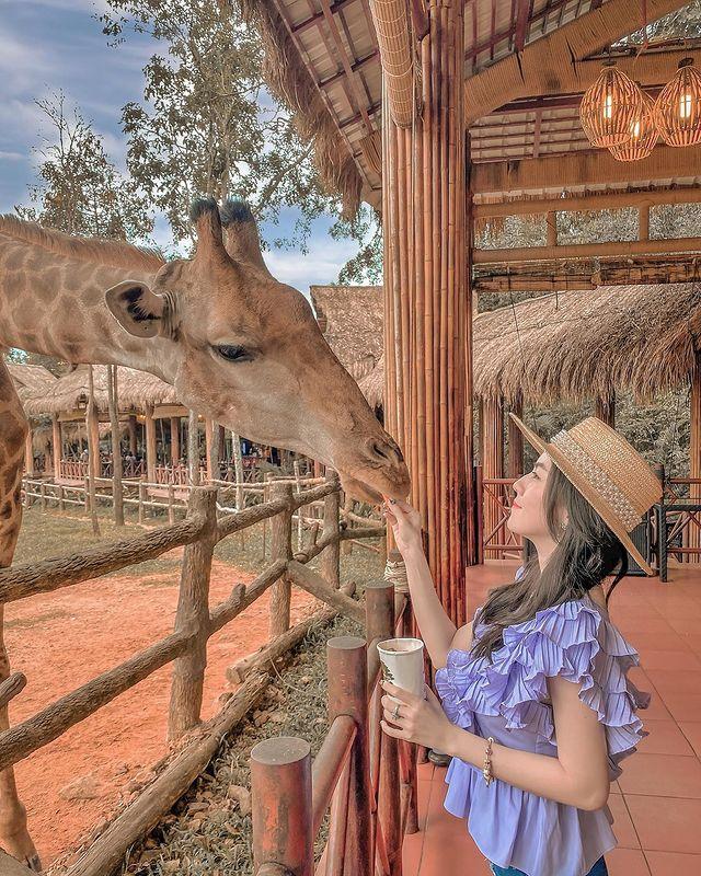tham quan vin safari phu quoc