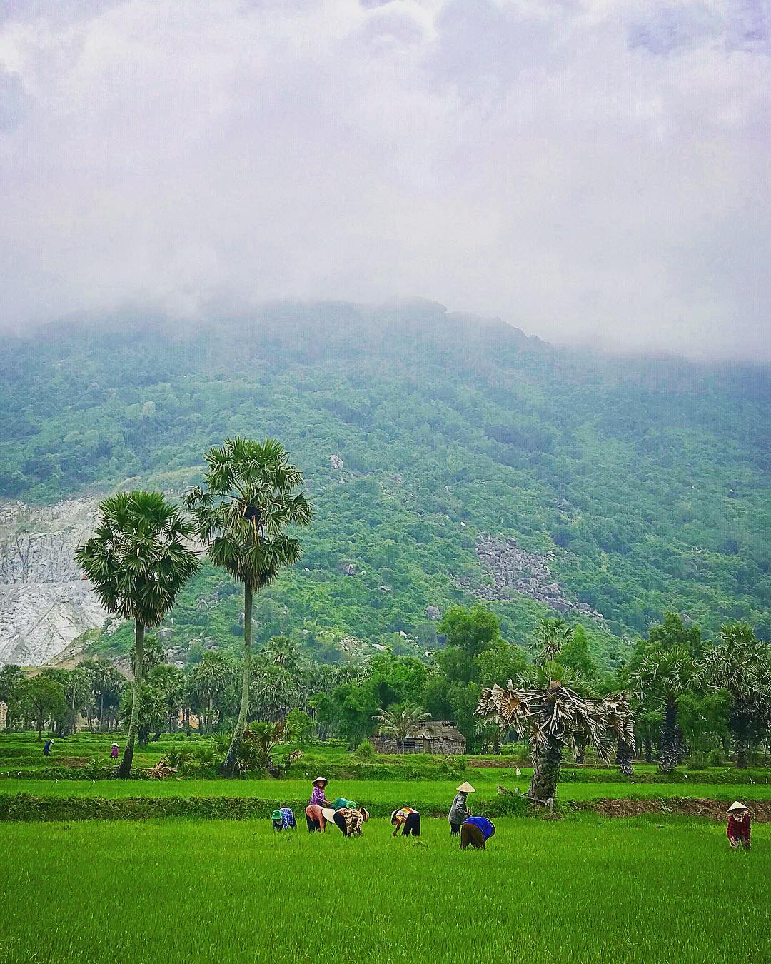 Đồng lúa An Giang