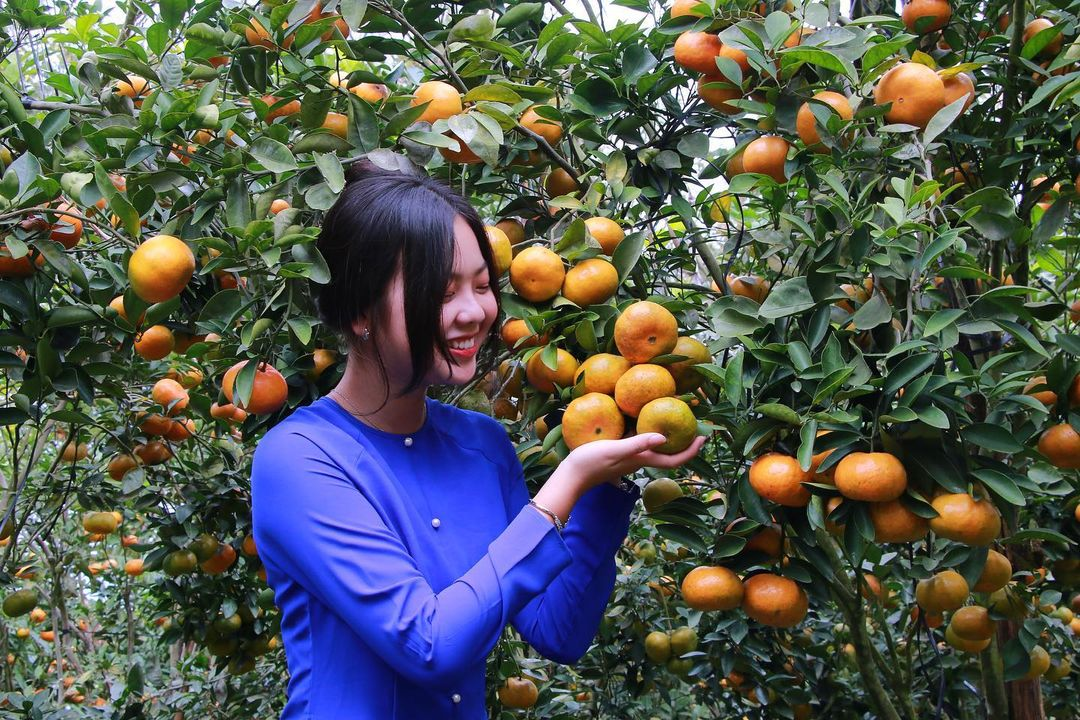 Vườn trái cây Bến Tre Ba Ngói