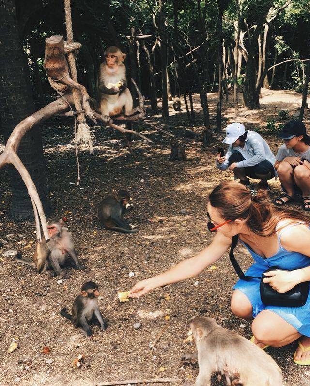 đảo khỉ 2