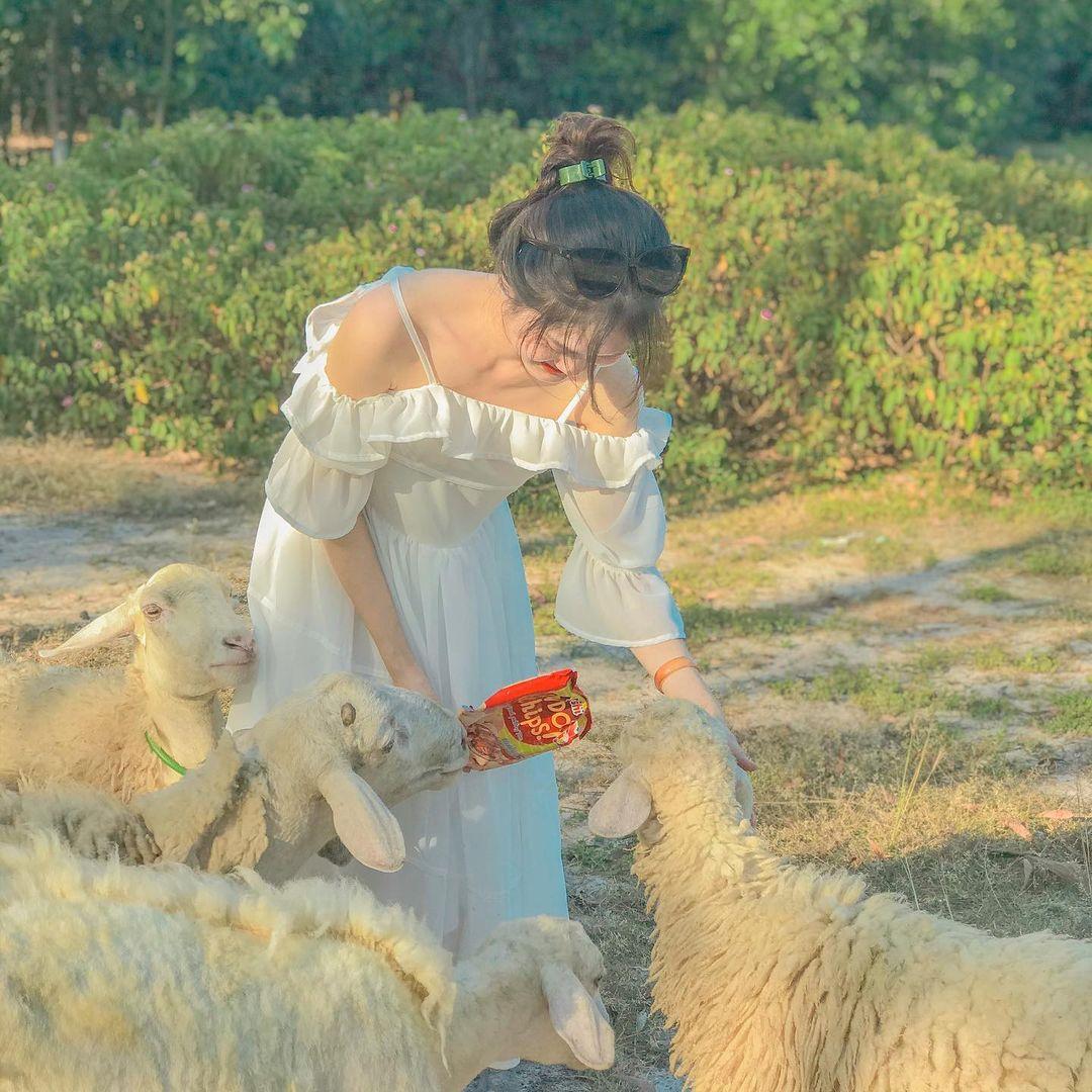 Trại cừu Sơn Thành - địa điểm du lịch Nghệ An