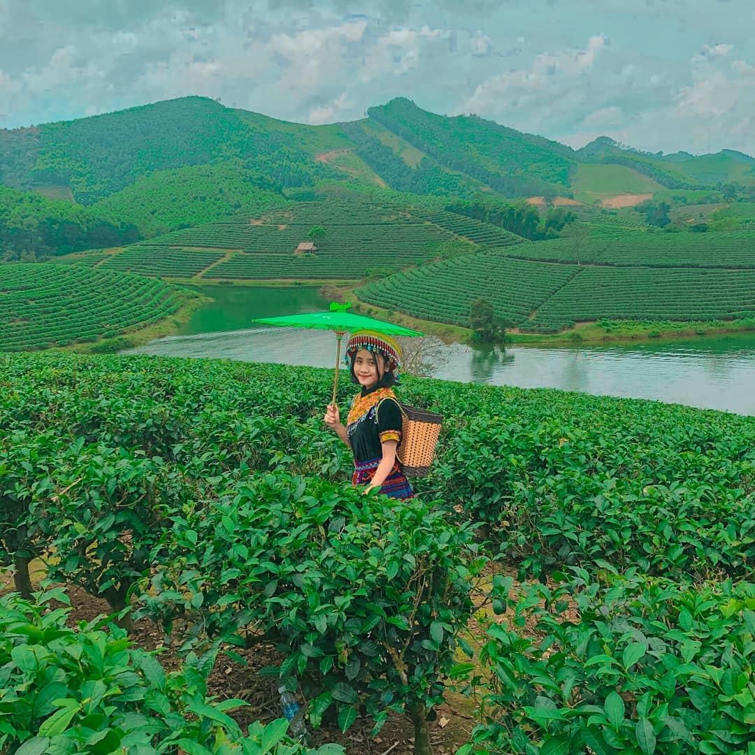 Đồi chè Thanh Chương - địa điểm du lịch Nghệ An