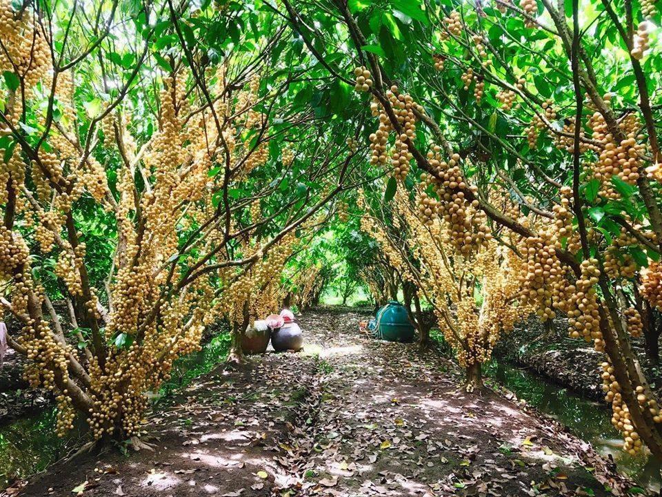 miệt vườn trái cây địa điểm du lịch cần thơ